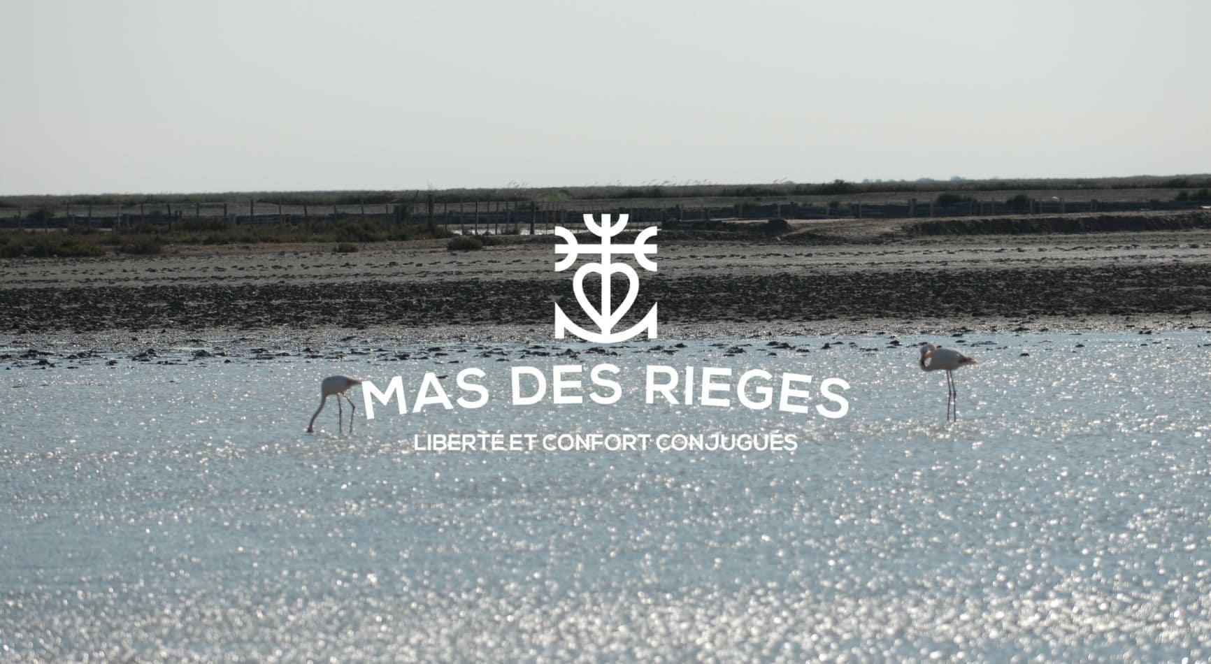 Flamants roses en Camargue